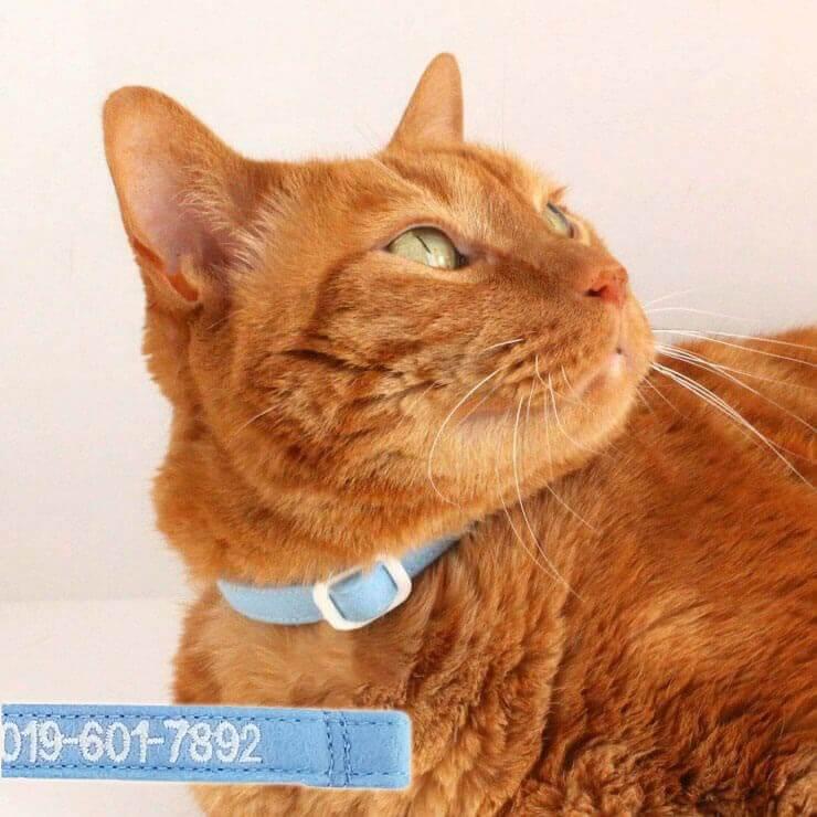 ネコさんの夏のおすすめグッズ:首輪を嫌がる猫さんへ