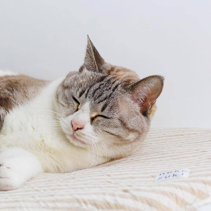 ネコさんの夏のおすすめグッズ:猫のマット(座布団)