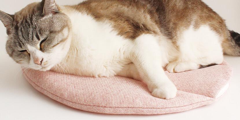 電気不要で留守番も安全な猫マット『ぽかぽかPOCKET』