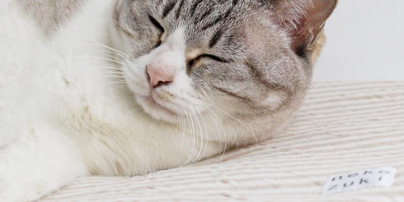 ペットキャリーにぴったりな猫用クッション『ozabu』