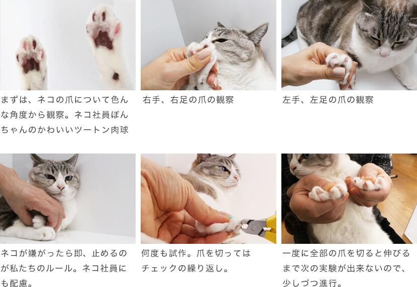 suwada猫用爪切りの開発の道のり